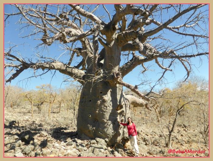 Baobab_Juls
